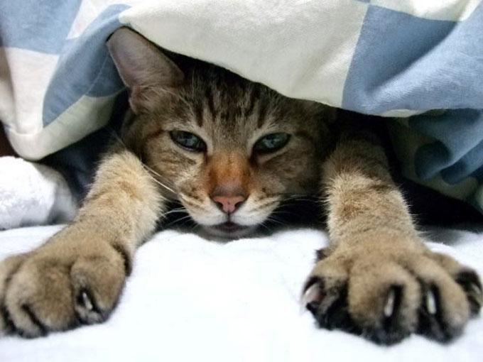 img-cat